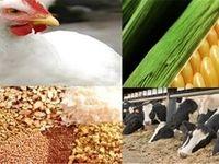 هشدار درباره قاچاق خوراک دام
