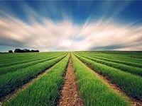 گام بلند دولت برای توسعه بخش کشاورزی در سال98