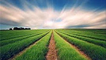 سهم واگذاری امسال دولت در حوزه کشاورزی 60درصد است