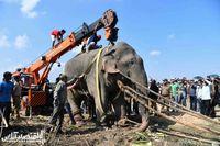 دستگیری فیل قاتل +عکس