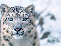 حیوانات در معرض انقراض +تصاویر