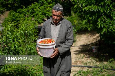 57883831_farshid-ardalan-1