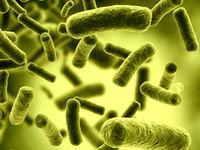 باکتریهای روده روند بیماری ALS را کُند میکنند