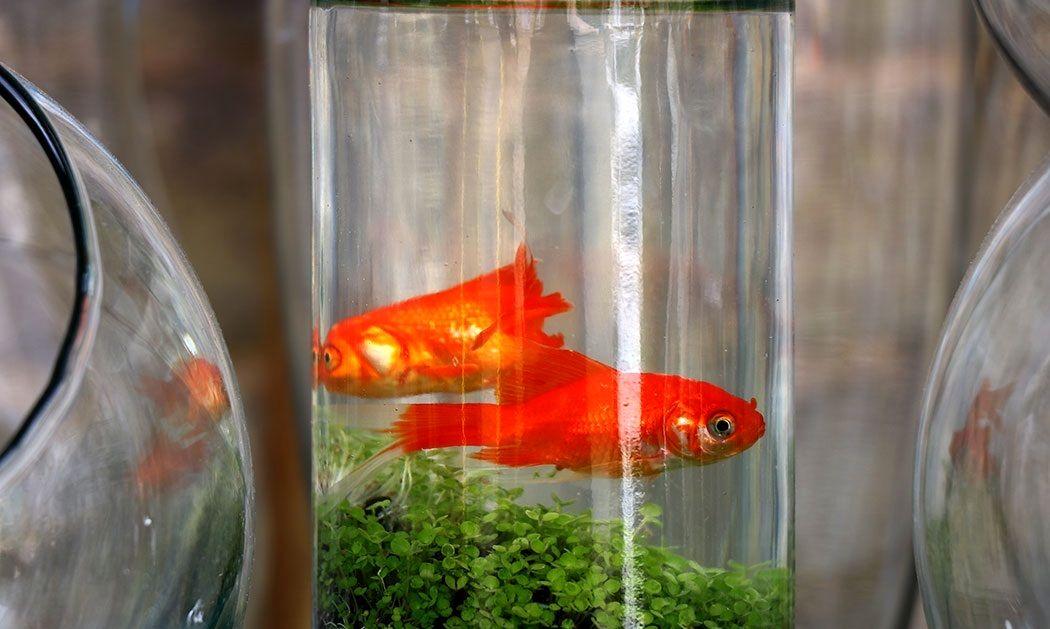 ماهی فروشی