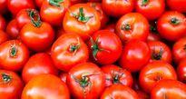 نوسان شدید قیمت گوجهفرنگی