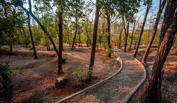 تکذیب قطع درختان چیتگر/ 95هکتار از پارک چیتگر خالی شده است
