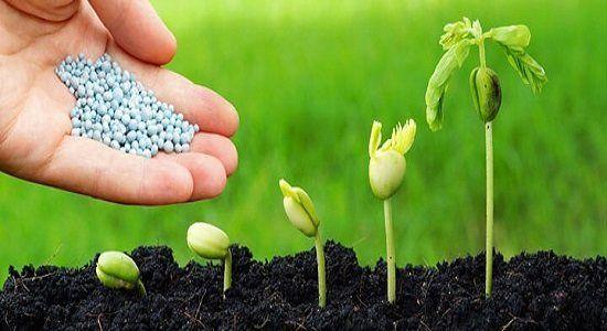 سیر صعودی تقاضای جهانی برای کودهای زیستی