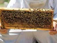 راه تشخیص عسل تقلبی چیست؟