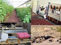 انحراف برخی استانها در پرداخت تسهیلات اشتغال روستایی
