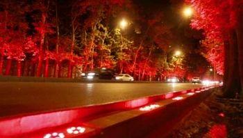 واکنش مدیرعامل سازمان بوستانها و فضای سبز شهر تهران به تداوم نورپردازی درختان ولیعصر/ شهرداری منطقه1 سرخود عمل میکند!