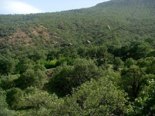2 میلیون هکتار از جنگلها در اختیار نهادهای دولتی و نظامی است