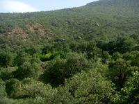 سوسکها و قاچاقچیان جنگلهای زاگرسی را میخورند