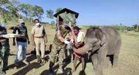 تست کرونا از فیل ها در هند + فیلم