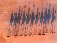 تصویر خیلی جالب کاروان شترها