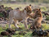 ۲۰ عکس منتخب گاردین از حیات وحش +تصاویر