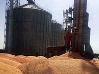 روسیه بزرگترین صادرکننده گندم در جهان شد