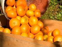تاثیر مصرف انواع میوه و تره بار در تقویت سیستم ایمنی بدن