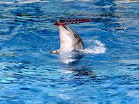 توضیحات مدیرکل محیط زیست شهرداری درباره مرگ دلفین برج میلاد/ ارزش هر دلفین 4.5میلیارد تومان است