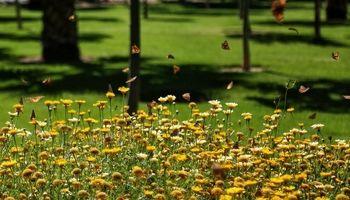 پروانههای رنگارنگ تهران؛ آفت نیستند/ پروانهها به زودی میروند