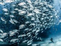 زندگی در اعماق اقیانوس چگونه است؟ +تصاویر