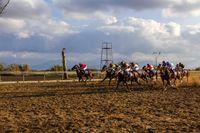 جدال اسبها در گنبدکاووس +تصاویر