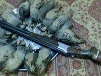 شکار و فروش پرندگان تا اطلاع ثانوی، ممنوع