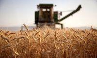 دولت گندم را چند میخرد؟