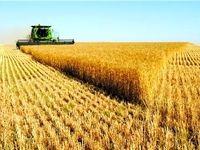۳دلیل عدم تحویل گندم به دولت از سوی کشاورزان