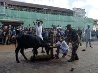 گردن زدن حیوانات به شیوه داعش +تصاویر +14