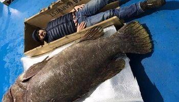 صید بزرگترین ماهی خاردار جهان در اقیانوس هند +عکس