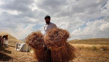 عقبماندگی 50ساله در کشاورزی