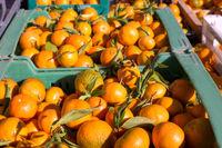 بازار آب پرتقال در آمریکا سکه شد