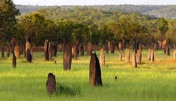 سازههای عجیب در استرالیا! +عکس