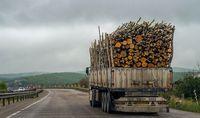 ویروس جنگل خواری در مازندران +تصاویر