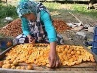 اصلاح وضعیت تغذیه زنان روستایی و عشایر، در دستور