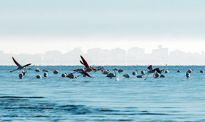 اینجا بهشت پرندگان است +تصاویر