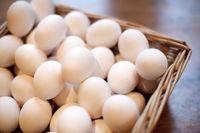 جشن آشتی ملی با تخم مرغ