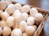 تخممرغهای ترکیهای در راه ایران