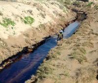 عملیات جمع آوری لکههای نفتی در گناوه ادامه دارد