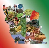 کشاورزان در انتظار تشکیل شورای قیمتگذاری