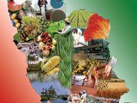 متوسط قیمت محصولات کشاورزی در زمستان۹۷ چقدر بود؟
