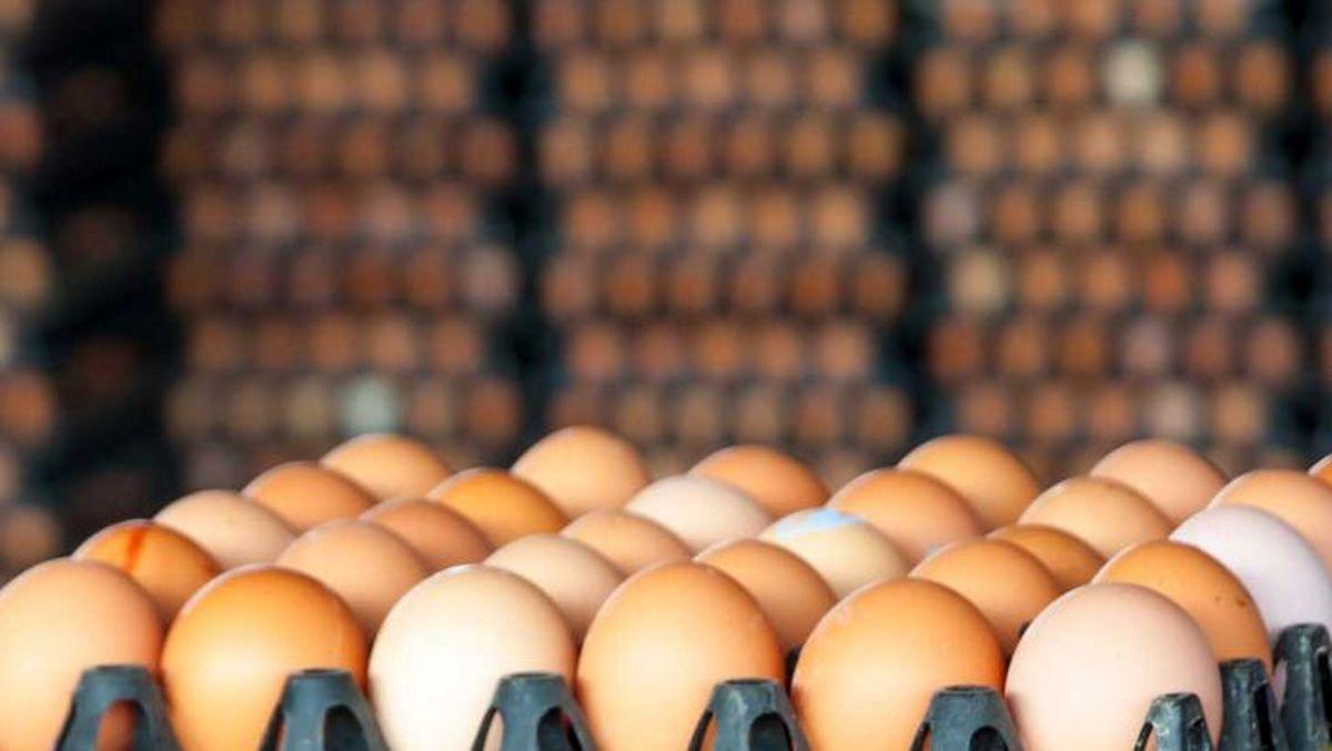 شرط جدید صادرات تخم مرغ