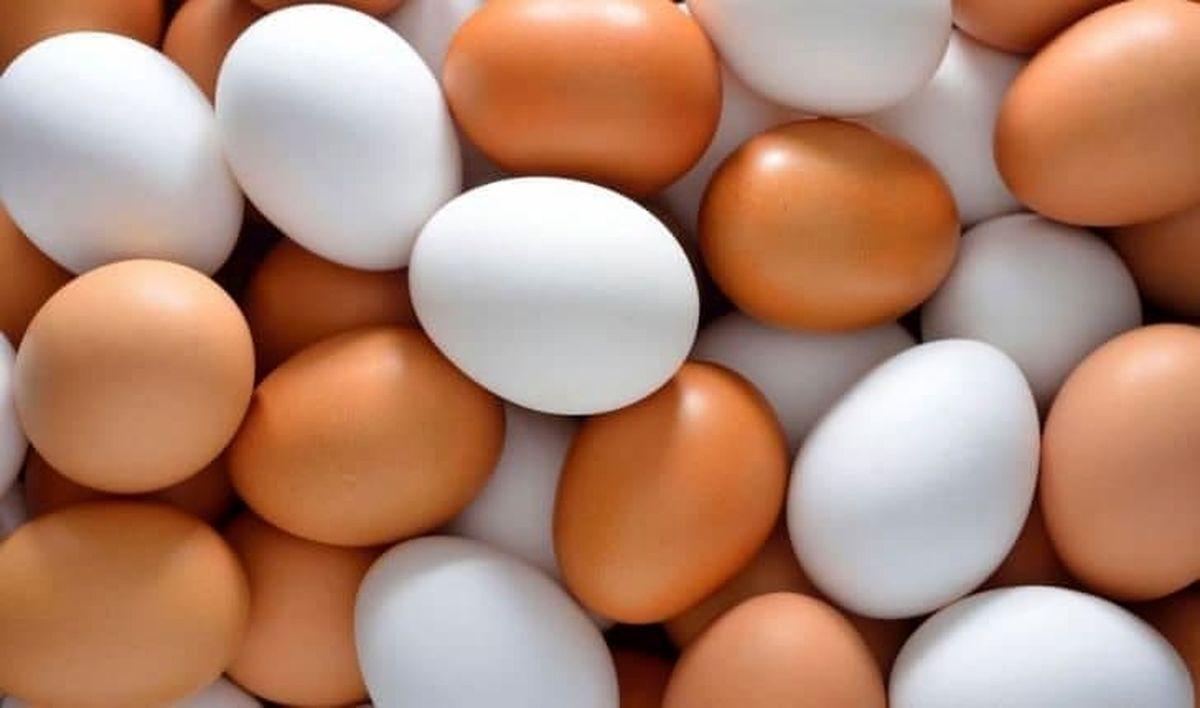 سبقت گرانی تخممرغ از مرغ