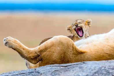 حیوانات خسته به روایت تصویر