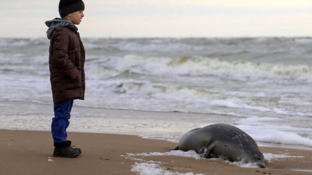 کشف لاشه تنها پستاندار دریای خزر + عکس