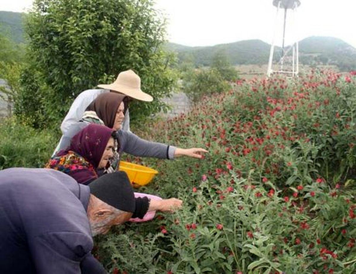 اقدامات کشاورزان برای روزهای پایانی تابستان