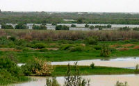 بخشی از مساحت سیستان و بلوچستان از خشکسالی خارج شد