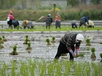 چالشهای کسبوکارهای روستایی در دوران کرونا