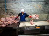 جدیدترین وضعیت بازار گوشت مرغ و ماهی
