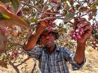 انبارها، آماده پذیرش پسته از تولیدکنندگان/ رسانه ملی، مهمترین بخش برای آشنایی کشاورزان با بورس کالا